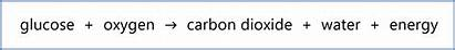 Respiration Equation Aerobic Word Photosynthesis Anaerobic Formula