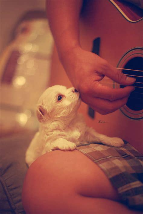 puppy love  world  fun