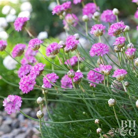 pink garden plants best pink flowers for your garden