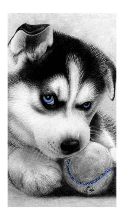 Husky Siberian Puppies Funny Dogs Puppy Huskies