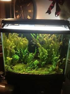 Amazing 50  Stunning Aquarium Design Ideas For Indoor