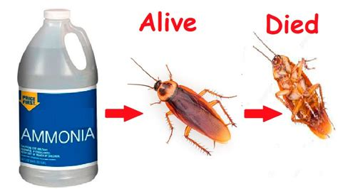 how to get rid of cockroaches in kitchen cabinets how to get rid of german roaches in my kitchen besto blog