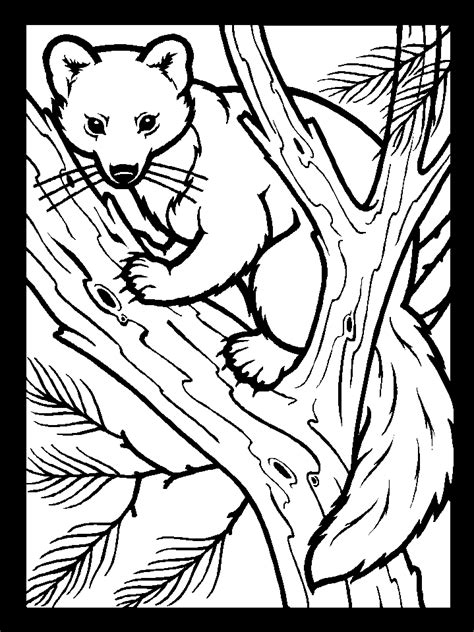 template Coloring pages nature Animal coloring pages