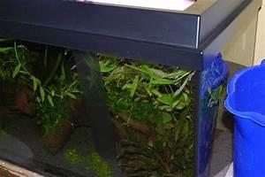 Aquarium Berechnen : aquarium wasserwechsel bedeutung aqua ~ Themetempest.com Abrechnung