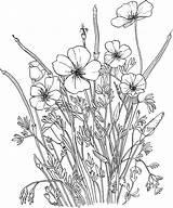 Coloring Pages Supercoloring Poppy Flower California Golden рисунки для раскраски цветочные sketch template