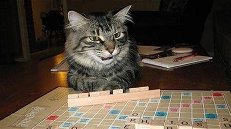 cats  play scrabble  pics bit rebels