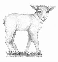 Best Sheep Drawing Ideas And Images On Bing Find What Youll Love