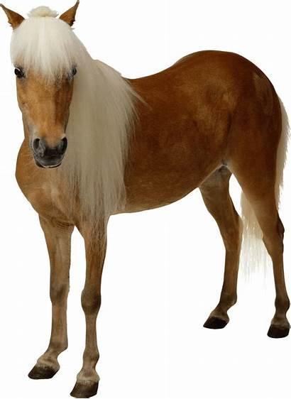 Horse Transparent Clipart Brown
