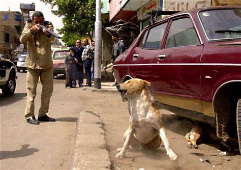 stop killing egypts animals egyptian streets