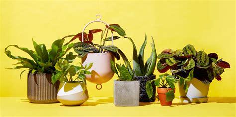 places  buy plants  cheap indoor plants