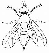 Fly Fruit Coloring Drawing Pages Drosophila Clip Flies Getcoloringpages Insect Getdrawings sketch template