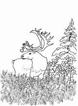 Coloring Animals Woodland Forest Creature Animal Printable Adults Adult Fantasy Bestcoloringpagesforkids Nature Tropical Popular Library Clipart Template sketch template