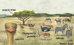 African Grassland Food Web Diagram