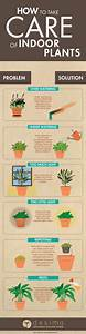 best indoor house plants a guide to greener room and With how to take care of a garden