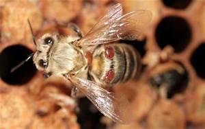 Mittel Gegen Bienen : neues mittel gegen bienensterben in sicht vet ~ Frokenaadalensverden.com Haus und Dekorationen