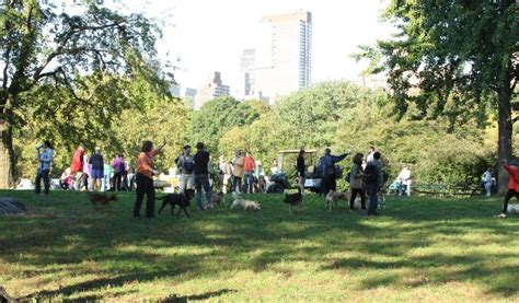 central park group dog walk  saturday