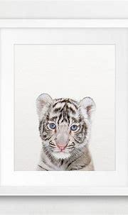 Tiger Print, White Tiger Cub Art, Baby Animal Prints ...