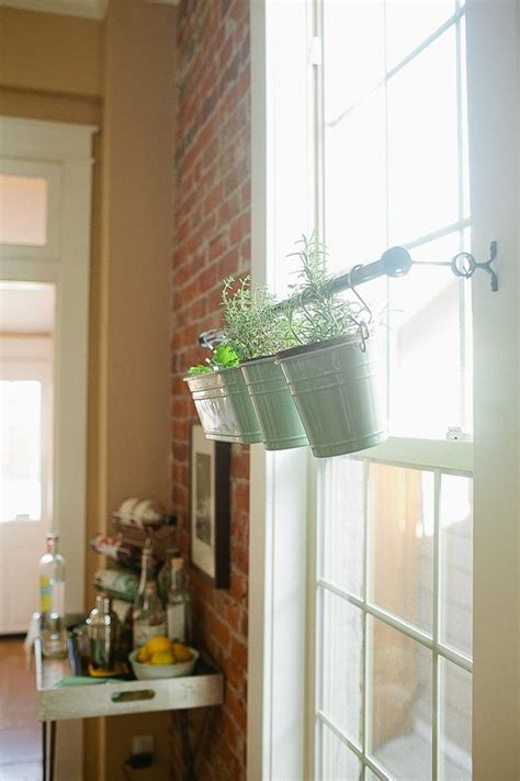 Indoor Window Herb Garden by 10 Best Evergreens Containers Images On
