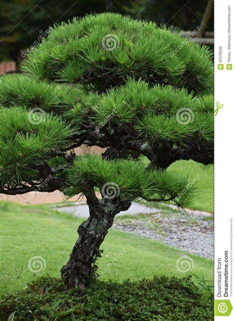 Japanischer Garten Bäume by Kiefer Im Japanischen Garten Stockfoto Bild Baum
