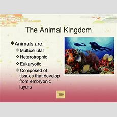 Ap Biology Ch 27 Introduction To Animal Diversity
