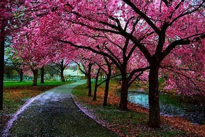 Spring Fanpop Trees Landscape Tree Pretty Nature