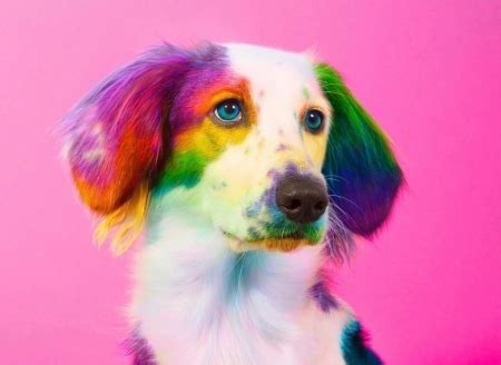Rainbow Animal Wallpaper - rainbow dogs animals background wallpapers on