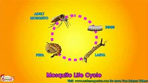 Life Cycle Video For Kids