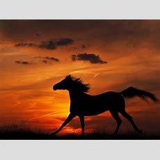 Pferdewallpaper Für Ihren Windowsdesktop Bilder
