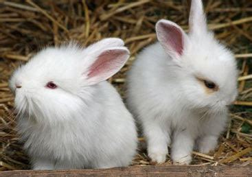 how to keep bunnies out of your garden how to keep rabbits out of your garden pets care