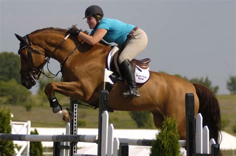 horse jumping brown horses hd equestrian jumper hunter wallpapers jumpers doing animals animalwalls