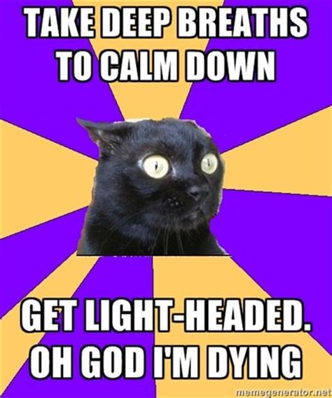 Anxiety Cat Memes - anxiety cat on pinterest 52 pins
