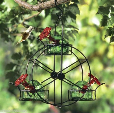 hummingbird feeder tips expedition everest nature explorations