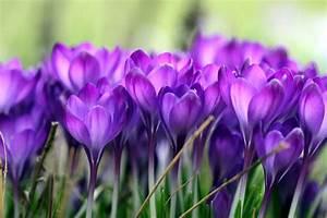 Lang Blühende Pflanzen : jetzt vorbereiten fr hlingsblumen drei monate lang im topf genie en gartenpflanzen ~ Eleganceandgraceweddings.com Haus und Dekorationen