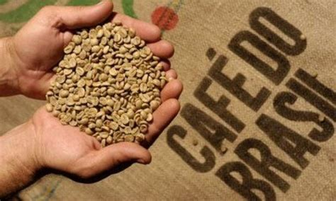 This is what gives the beans their pale green colour. Coffee Beans from Brazil, Products derived from Brazilian Coffee