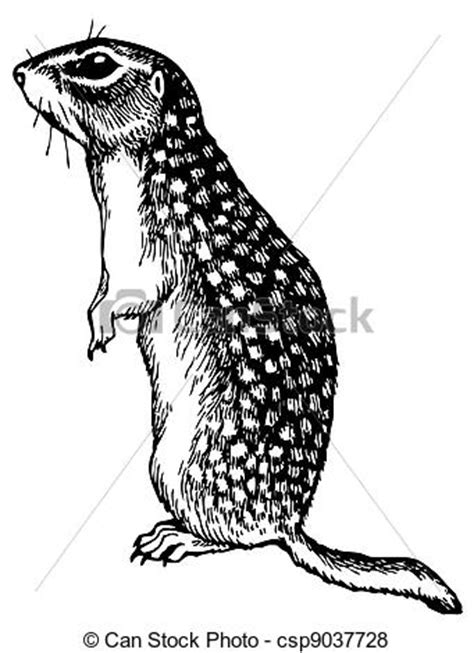 gopher clipart black and white vector of watchful gopher standing on white background