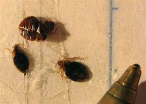 bed bugs plague ohio university dormitory my cleaning With bed bugs in ohio