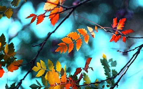 Pictures Of Fall For Desktop Wallpaper Autumn Blue Leaf Ash Leaves