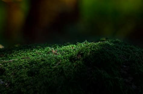 photo moss forest green forest floor  image