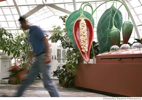 san francisco exhibit  plants  give medicine