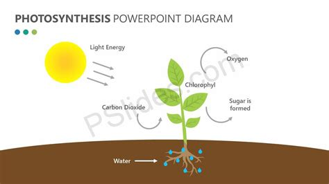 photosynthesis powerpoint diagram pslides