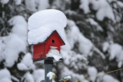 Englischer Garten In Winter by Tasks For Your Winter Garden