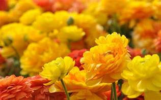 same day flowers viva verde florist brighton hove order online or 01273