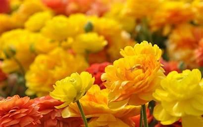 Flower Flowers Wallpapers Mexican Desktop