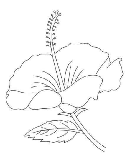 gambar mewarnai bunga sepatu