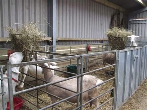 goat housing  accidental smallholder