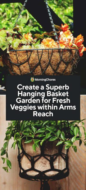 Hanging Vegetable Garden by How To Create A Hanging Vegetable Garden For Fresh Veggies