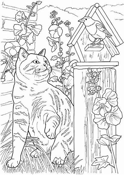 Coloring Pages Adult Cats Colouring Dogs Doverpublications