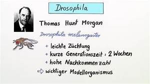 Kombinationen Berechnen Online : klassische genetik oberstufe online lernen ~ Themetempest.com Abrechnung