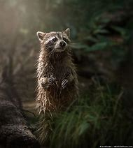National Geographic Photographer Nature of t…