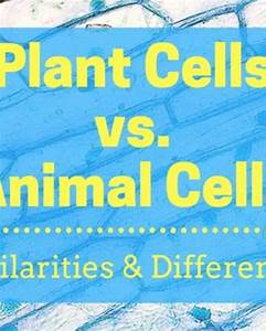 What Are The Differences Between Animal And Plant Cells